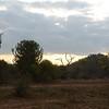 MalaMala landscape