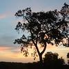 Sunset at MalaMala