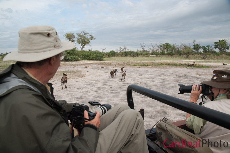 Chitabe, Dogs and Zebra, Botswana