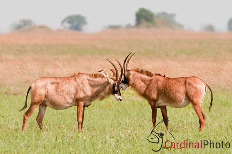Busanga Plains, Kafue Park, Zambia