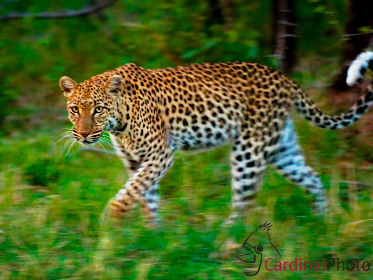 Vumbura Okavango Botswana 1/ 30s, at f/2.8 || E.Comp:0 || 200mm || WB: AUTO 0. || ISO: 800 || Tone: AUTO || Sharp: AUTO || Camera: NIKON D2Hon: 2003:01:26 18:09:23
