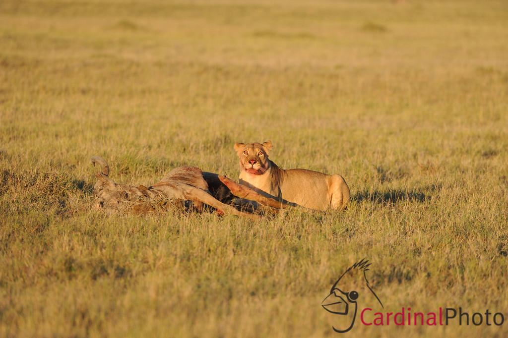 Jack's Camp, Kalahari Desert, Botswana
