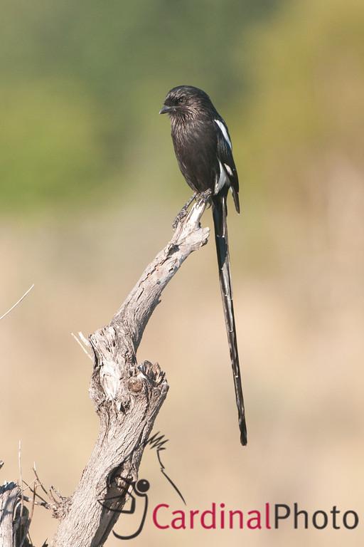 Chitabe, Okavango Delta, Botswana