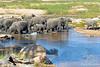 Elephants crossing @ Rattray's ~ Mala Mala Sabi Sands NP, South Africa