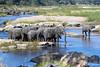 Elephant Herds (2) @ Rattray's ~ Mala Mala Sabi Sands NP, South Africa