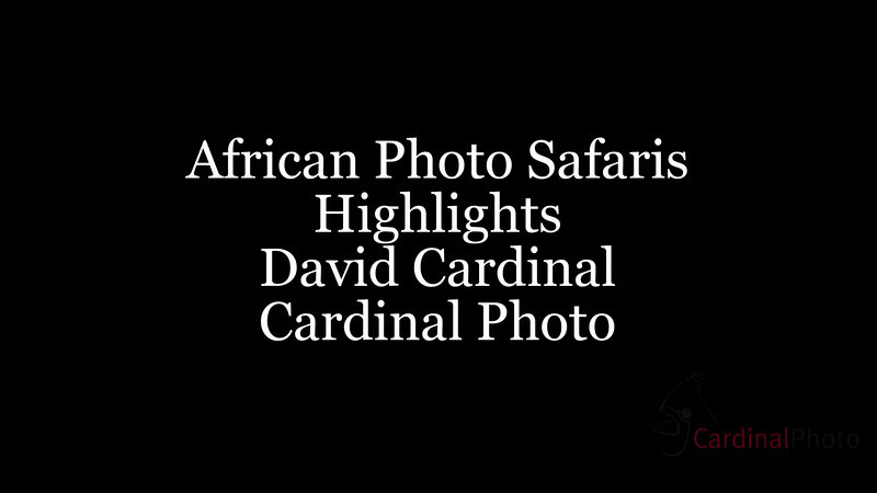 "Highlights of our African Photo Safaris to Botswana, Namibia, Zambia, and Victoria Falls. Please join us at <a href=""http://cardinalphoto.com"">http://cardinalphoto.com</a> if you'd like to come along and take your own images like these."