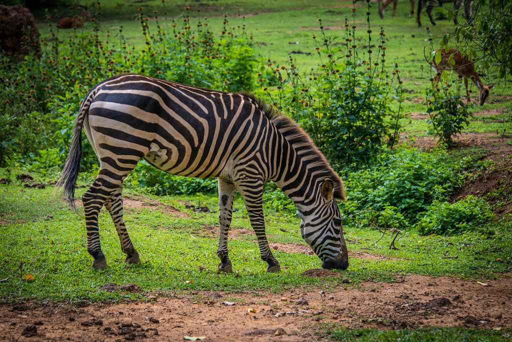 150_Uganda_2013-7874