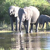 elephants&mokoro