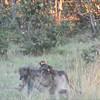 Baboons and kudu