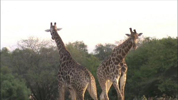 botswana videos