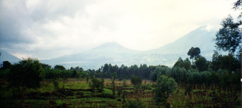 Virunga mountains gorillas