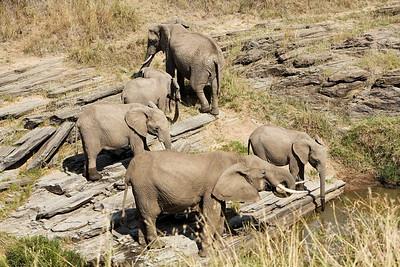 Elephants getting a drink