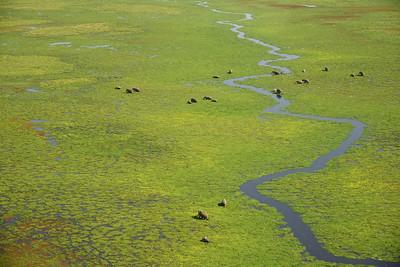Kanzi to Mara by plane--elephants at Amboseli