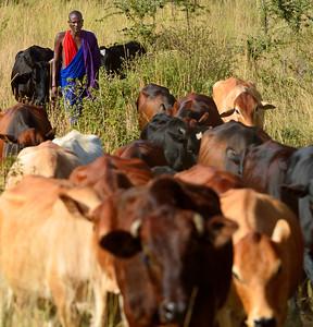 Maasai Herder near Kanzi