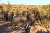 CRay-Africa16-8846-2