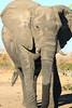 CRay-Africa16-9057