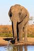 CRay-Africa16-9024