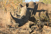 CRay-Africa16-8950