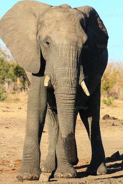 CRay-Africa16-9069