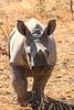 CRay-Africa16-9166