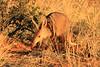 CRay-Africa16-4002