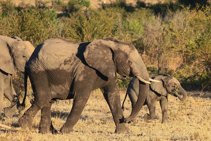 CRay-Africa16-9094