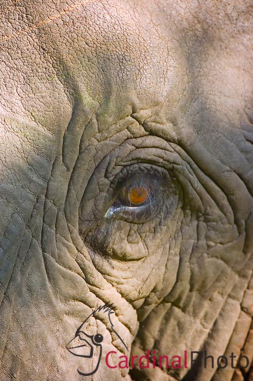 Vumbura, Botswana 1/ 160s, at f/4 || E.Comp:0 || 400mm || WB: AUTO 0. || ISO: 200 || Tone: AUTO || Sharp: AUTO || Camera: NIKON D2Hon: 2006:11:27 21:43:32