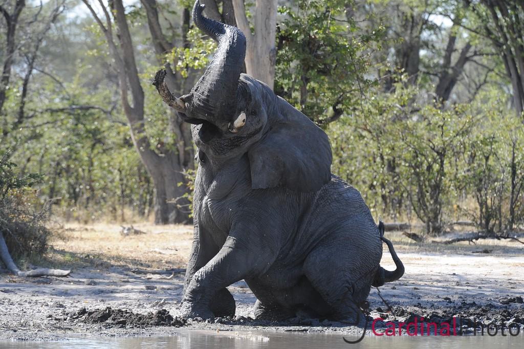 The Selinda Reserve, Botswana 1/ 500s, at f/8 || E.Comp:0 || 450mm || WB: AUTO 0. || ISO: 800 || Tone:  || Sharp:  || Camera: NIKON D3on: 2008:05:07 01:11:27