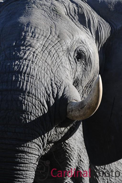 The Selinda Reserve, Botswana 1/ 1000s, at f/6.7 || E.Comp:0 || 380mm || WB: AUTO 0. || ISO: 800 || Tone:  || Sharp:  || Camera: NIKON D3on: 2008:05:07 23:34:03