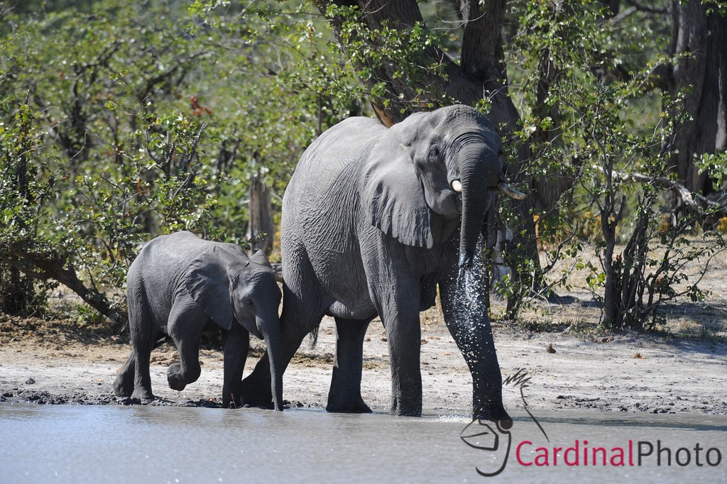 The Selinda Reserve, Botswana 1/ 1000s, at f/6.7 || E.Comp:0 || 550mm || WB: AUTO 0. || ISO: 800 || Tone:  || Sharp:  || Camera: NIKON D3on: 2008:05:07 01:02:59