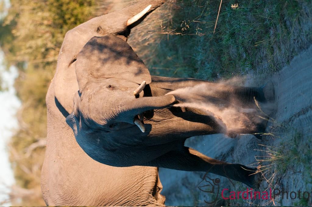 Hwange National Park Zimbabwe
