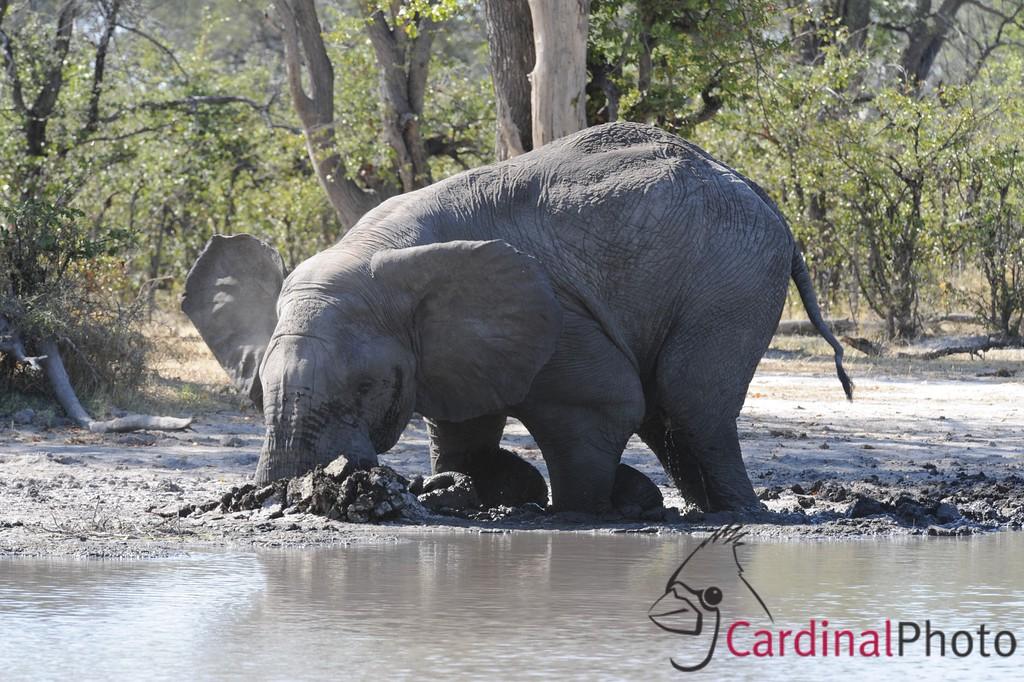 The Selinda Reserve, Botswana 1/ 180s, at f/13 || E.Comp:0 || 450mm || WB: AUTO 0. || ISO: 800 || Tone:  || Sharp:  || Camera: NIKON D3on: 2008:05:07 01:11:24