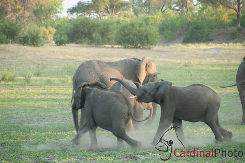 Savuti, Botswana 1/ 90s, at f/5.6 || E.Comp:0 || 170mm || WB: AUTO 0. || ISO: 400 || Tone: AUTO || Sharp: AUTO || Camera: NIKON D2Xon: 2006:12:04 18:21:03