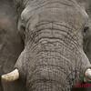 Vumbura Okavango Botswana 1/ 250s, at f/4    E.Comp:0    200mm    WB: AUTO 0.    ISO: 560    Tone: AUTO    Sharp: AUTO    Camera: NIKON D2Xon: 2005:11:28 22:00:39
