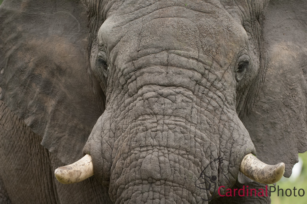 Vumbura Okavango Botswana 1/ 250s, at f/4 || E.Comp:0 || 200mm || WB: AUTO 0. || ISO: 560 || Tone: AUTO || Sharp: AUTO || Camera: NIKON D2Xon: 2005:11:28 22:00:39