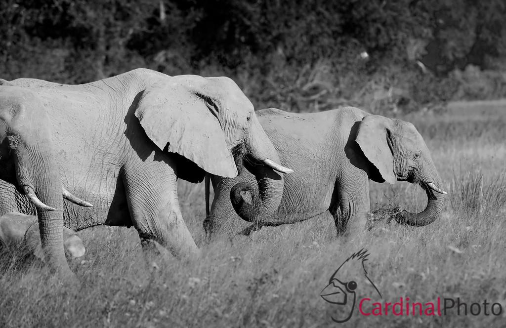 Vumbura, Botswana 1/ 1500s, at f/8 || E.Comp:0 || 400mm || WB: AUTO 0. || ISO: 800 || Tone:  || Sharp:  || Camera: NIKON D3on: 2008:05:13 17:09:08
