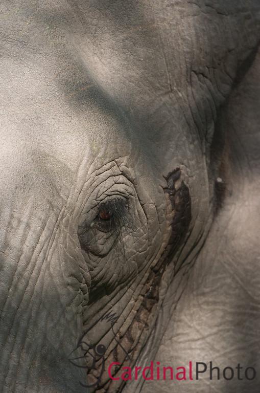Vumbura, Botswana 1/ 250s, at f/4 || E.Comp:0 || 400mm || WB: AUTO 0. || ISO: 200 || Tone: AUTO || Sharp: AUTO || Camera: NIKON D2Hon: 2006:11:27 21:45:31