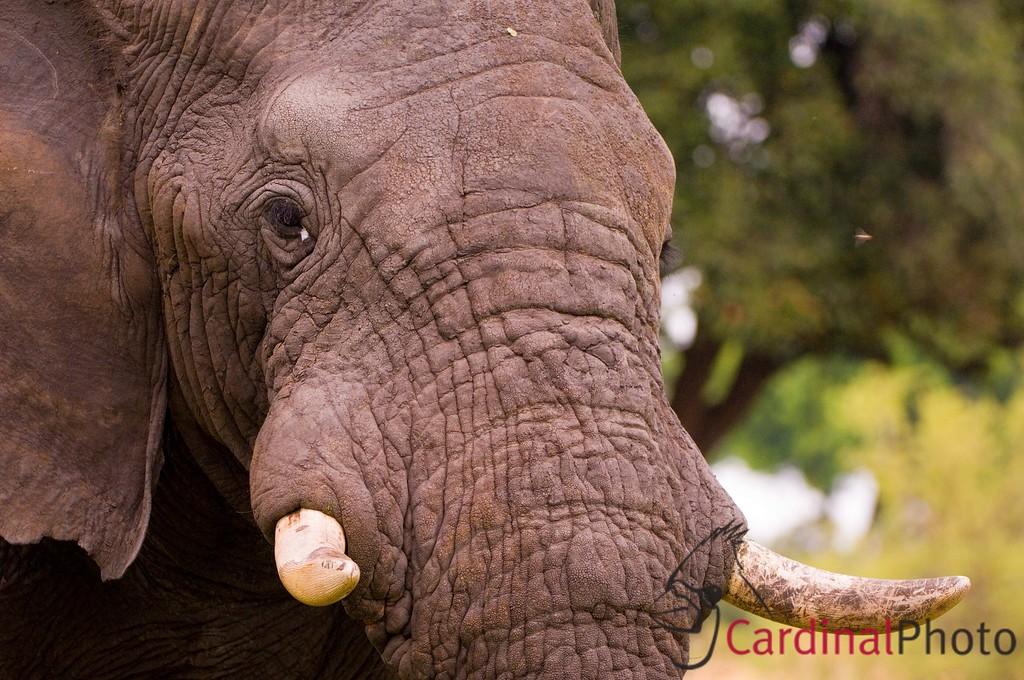 Vumbura Okavango Botswana 1/ 320s, at f/4 || E.Comp:0 || 200mm || WB: AUTO 0. || ISO: 560 || Tone: AUTO || Sharp: AUTO || Camera: NIKON D2Xon: 2005:11:28 22:00:34