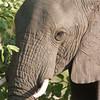 Vumbura, Botswana 1/ 125s, at f/8    E.Comp:0    400mm    WB: AUTO 0.    ISO: 280    Tone: AUTO    Sharp: AUTO    Camera: NIKON D2Hon: 2006:11:25 20:54:27
