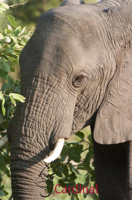 Vumbura, Botswana 1/ 125s, at f/8 || E.Comp:0 || 400mm || WB: AUTO 0. || ISO: 280 || Tone: AUTO || Sharp: AUTO || Camera: NIKON D2Hon: 2006:11:25 20:54:27