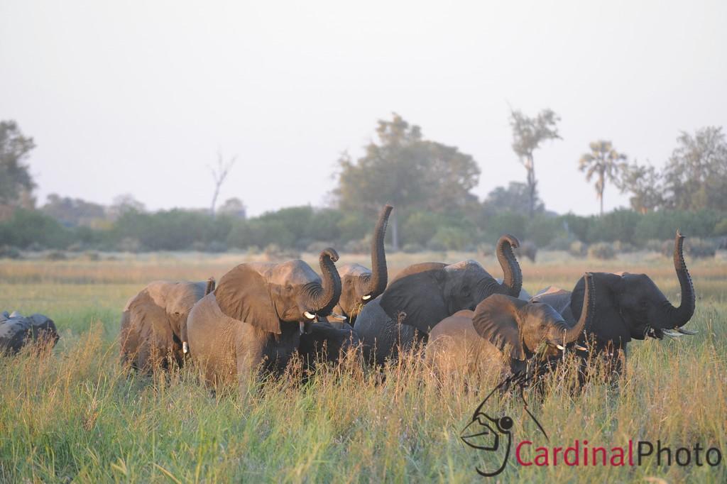 Chitabe, Botswana 1/ 250s, at f/5.6 || E.Comp:0 || 400mm || WB: AUTO 0. || ISO: 1600 || Tone:  || Sharp:  || Camera: NIKON D3on: 2008:05:09 18:50:32