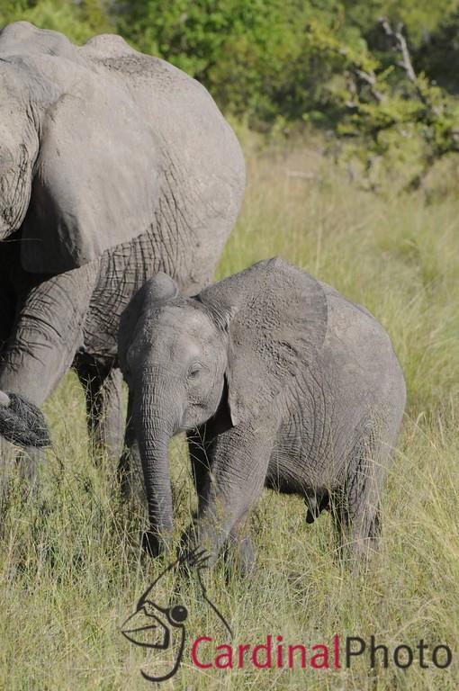 Little Vumbura Area, Okavango Delta, Botswana