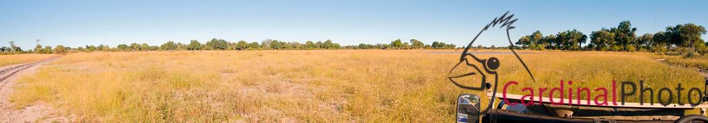 Vumbura, Botswana 1/ 500s, at f/13 || E.Comp:0 || 22mm || WB: AUTO 0. || ISO: 560 || Tone:  || Sharp:  || Camera: NIKON D300on: 2008:05:13 16:25:04