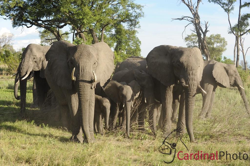 Vumbura Concession, Botswana