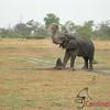 Khalaharii, Botswana 1/ 80s, at f/5.3    E.Comp:0    26.3mm    WB: AUTO 0.    ISO: 0    Tone:     Sharp: AUTO    Camera: COOLPIX P4on: 2006:12:06 10:47:21