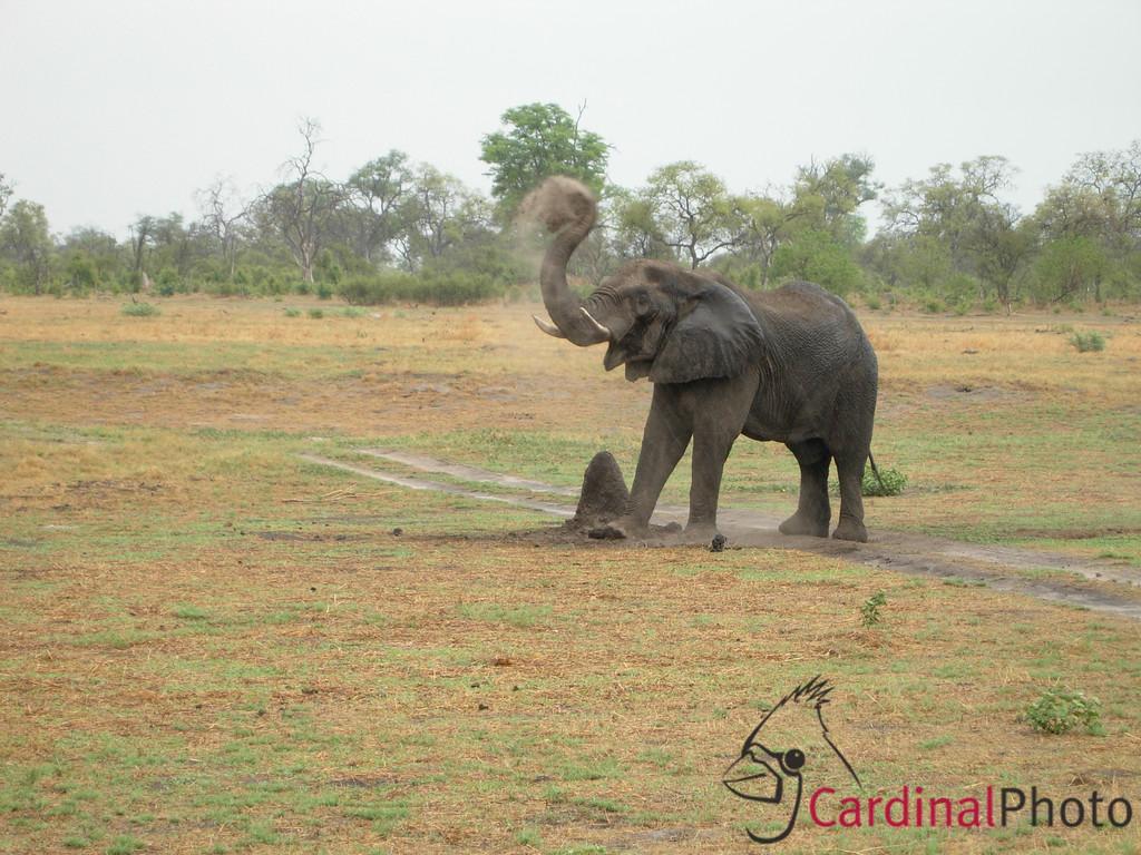 Khalaharii, Botswana 1/ 80s, at f/5.3 || E.Comp:0 || 26.3mm || WB: AUTO 0. || ISO: 0 || Tone:  || Sharp: AUTO || Camera: COOLPIX P4on: 2006:12:06 10:47:21