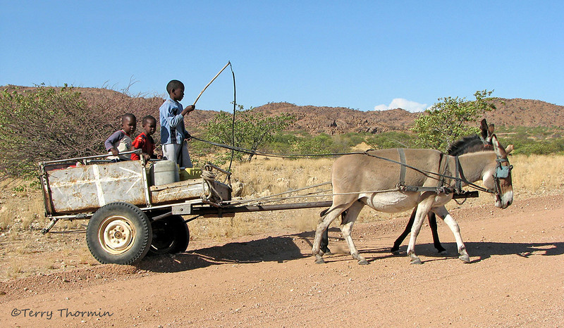 Cart and donkeys - Road to Brandberg, Namibia