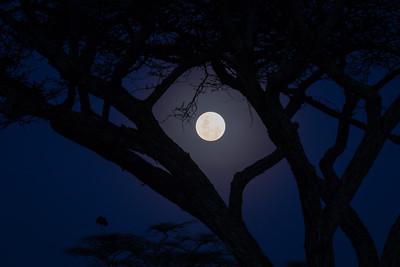 Ndutu Moonrise