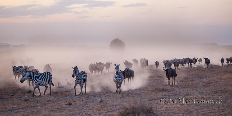 Migration Dust Cloud