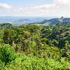Rain forest surrounding Ngonguembo